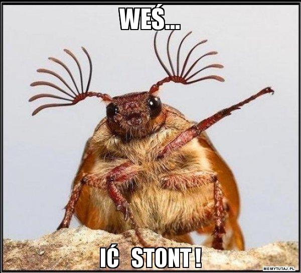 wes-ic-stont.jpg.d5d93a28faa9477f5b0bc33adb5395de.jpg